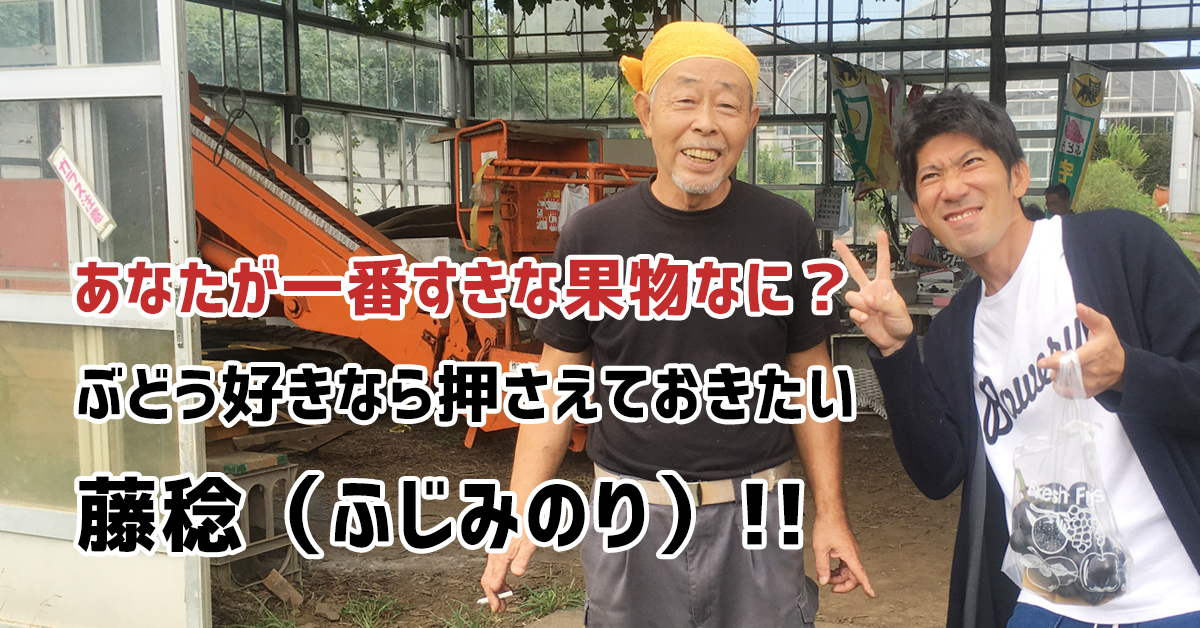 藤沢でぶどう狩りを楽しむなら絶対オススメ「弁慶果樹園」。品種の藤稔(ふじみのり)がめちゃめちゃおいしかったよ!馬もいるよ。